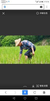 这是一张关于泰优390 中稻的产品图片