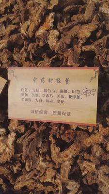 安徽省亳州市谯城区苍术