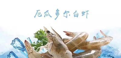 河北省石家庄市长安区南美白对虾 人工殖养 3-5钱