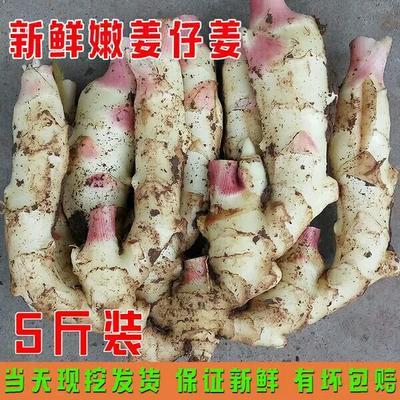 山东省潍坊市寒亭区红芽姜 带土 5两以上