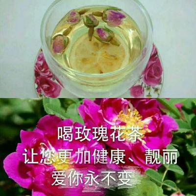 这是一张关于玫瑰花茶 袋装 特级的产品图片