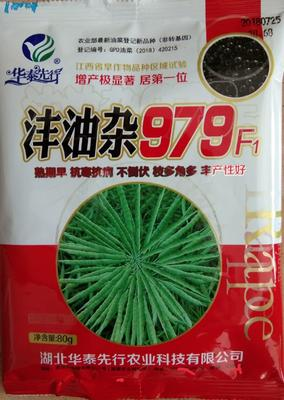 湖南省常德市鼎城区油菜籽种子