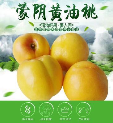山东省临沂市蒙阴县黄油桃 3两以上 50mm以上
