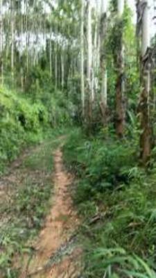 广西壮族自治区河池市南丹县桉木