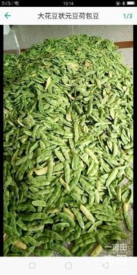 这是一张关于荷包豆 生大豆 1等品的产品图片