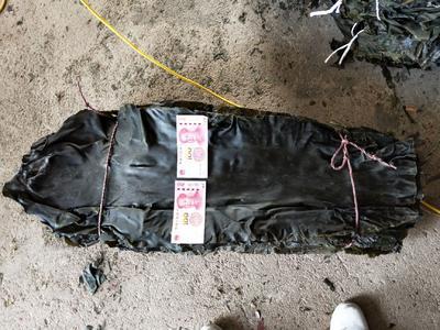 这是一张关于大钦岛海带的产品图片