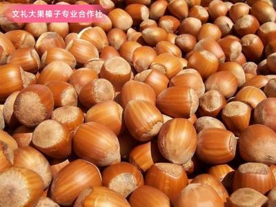 这是一张关于坚果树苗 1~1.5米的产品图片