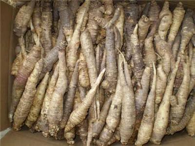 这是一张关于山胡萝卜的产品图片