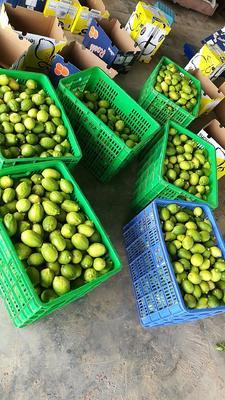 广东省惠州市惠东县香水柠檬 2.7 - 3.2两