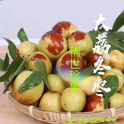 陕西省渭南市大荔县大荔冬枣 拐一 10-20g