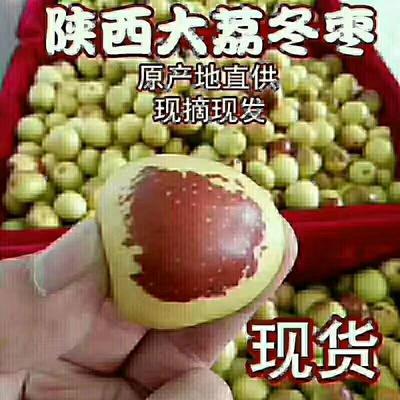 陕西省渭南市澄城县冬枣 直口 10g以下