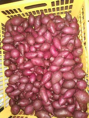 广西壮族自治区崇左市凭祥市越南紫薯 3两以上