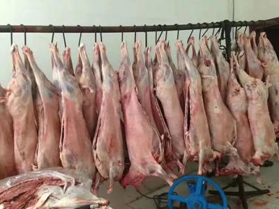 河北省沧州市献县白条羊 简加工