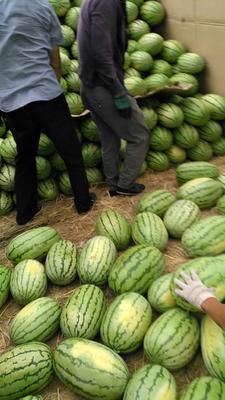 这是一张关于沙漠西瓜 有籽 1茬 8成熟 8斤打底的产品图片
