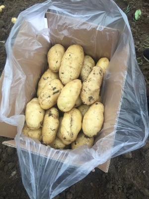 这是一张关于土豆专用叶面肥 的产品图片