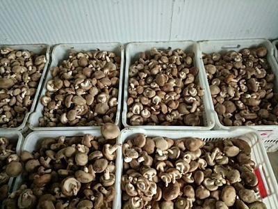 这是一张关于原木干香菇 散装 半年的产品图片