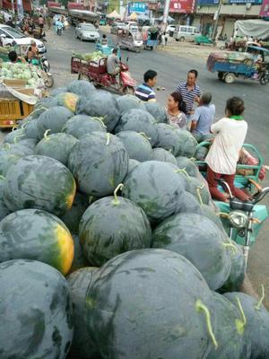 这是一张关于黑皮无籽西瓜 无籽 1茬 8成熟 7斤打底的产品图片