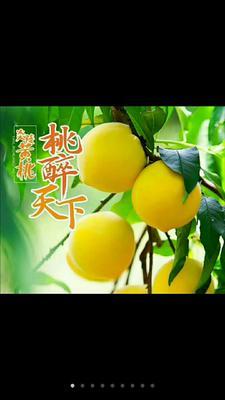 这是一张关于炎陵黄桃 60mm以上 4两以上的产品图片