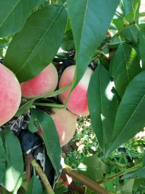 这是一张关于水蜜桃 70mm以上 4两以上的产品图片