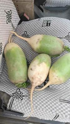 山西省晋中市榆次区791罐萝卜 2~2.5斤