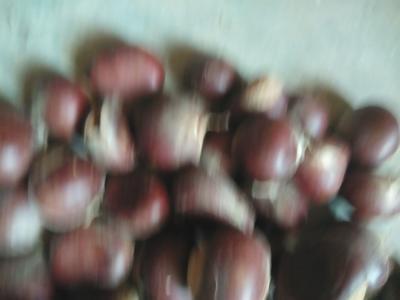 这是一张关于仓更板栗 特级 珍珠栗的产品图片