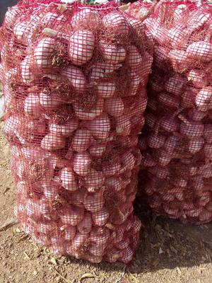 这是一张关于杂交大蒜 混级统货 多瓣蒜 的产品图片