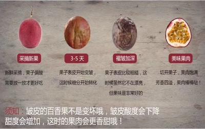 广西壮族自治区南宁市上林县紫香一号百香果 50 - 60克