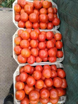 这是一张关于大红硬果 打冷 大红 通货的产品图片