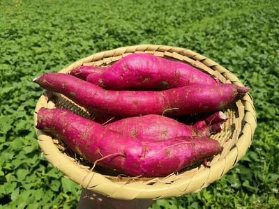 湖南省郴州市永兴县一点红红薯 红皮 3~8两