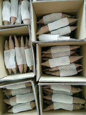 这是一张关于秦薯四号 红皮 3两以上的产品图片