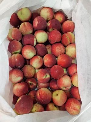 河北省石家庄市晋州市黄油桃 2两以上 55mm以上