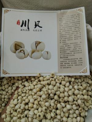 这是一张关于川贝母的产品图片