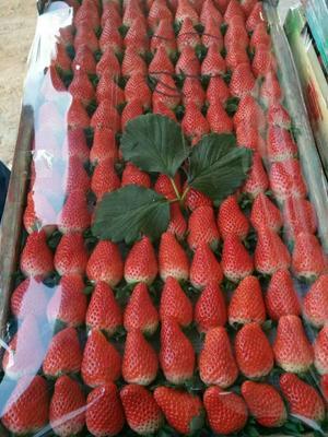 这是一张关于甜查理草莓苗 地栽苗 20~30公分的产品图片