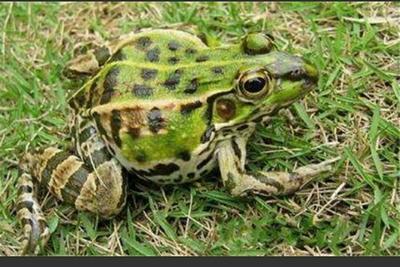 河南省周口市太康县青蛙