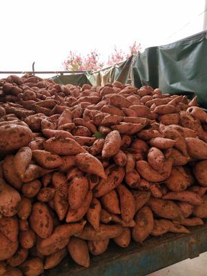 这是一张关于龙薯九号 红皮 混装统货的产品图片