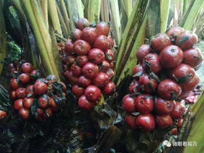 这是一张关于草果的产品图片