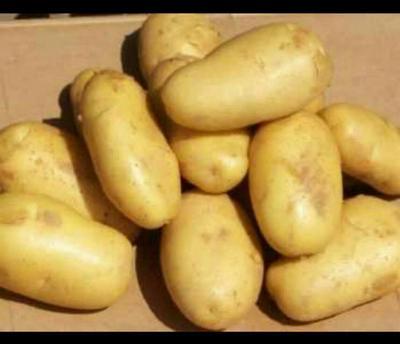 这是一张关于早大白土豆 5两以上的产品图片