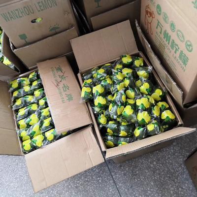 广东省佛山市顺德区青柠檬 2 - 2.6两