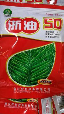 这是一张关于油菜籽的产品图片