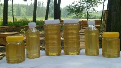 这是一张关于土蜂蜜 桶装 98% 2年的产品图片