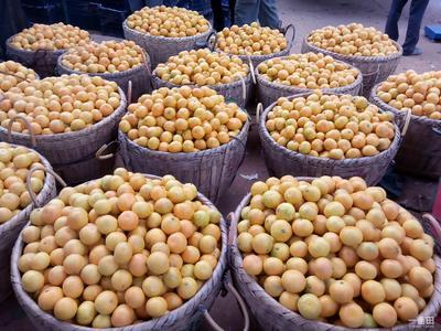这是一张关于东江湖蜜橘 6.5 - 7cm 2 - 3两的产品图片