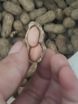 广西壮族自治区北海市合浦县带壳花生 干货 带壳花生