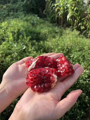 这是一张关于突尼斯软籽石榴 0.3 - 0.5斤的产品图片
