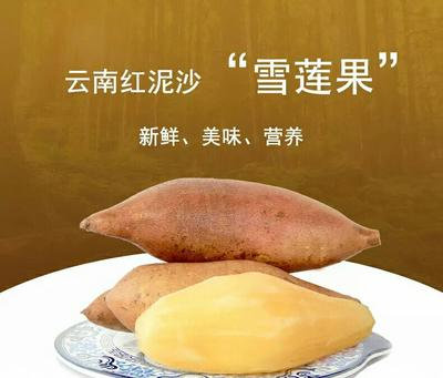 这是一张关于云南高原雪莲果 3两以上的产品图片