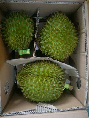 这是一张关于越南金枕榴莲 90%以上 3 - 4龙8国际官网官方网站的产品图片