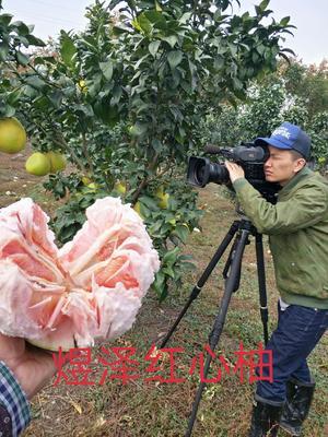 这是一张关于马家柚 2.5斤以上的产品图片
