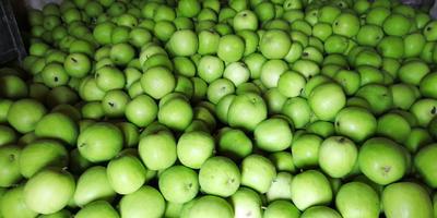 这是一张关于芋香冬瓜 2斤以上 白霜的产品图片