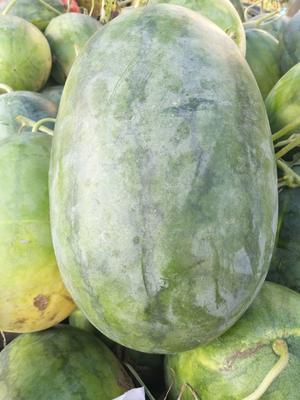 这是一张关于龙卷风西瓜 有籽 1茬 8成熟 7斤打底的产品图片
