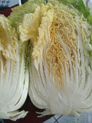 这是一张关于玲珑黄白菜 3~6斤 净菜的产品图片