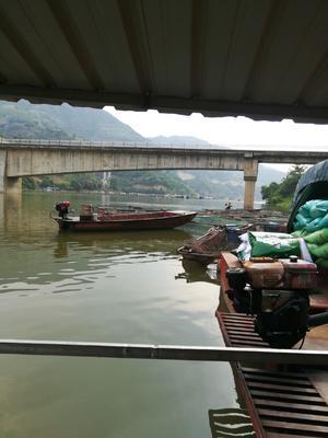 云南省红河哈尼族彝族自治州个旧市淡水青鱼 人工养殖 1.5-6公斤